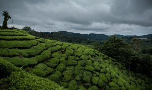 Cameron Highlands cloud and cold weather