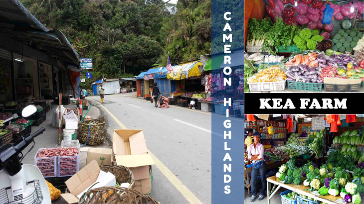 KEA Farm Cameron farm market