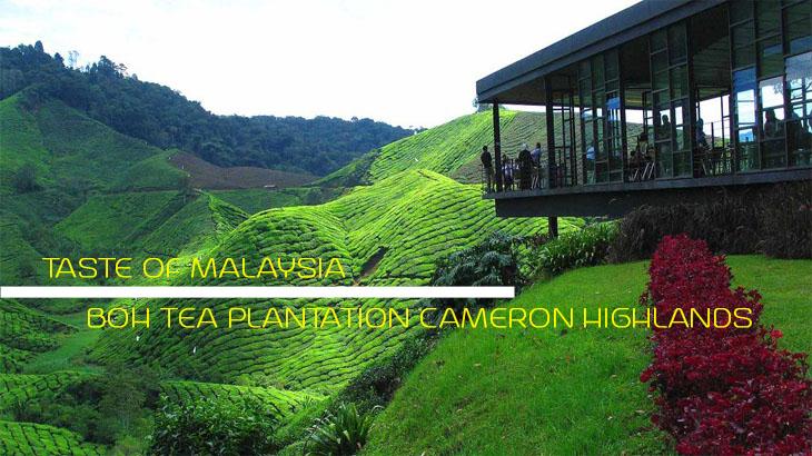 Boh-Tea-Plantation-Cameron