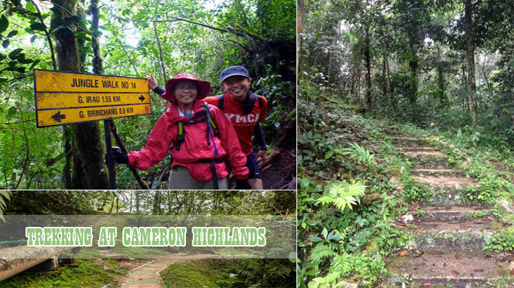 Trekking-at-Cameron-Highlands